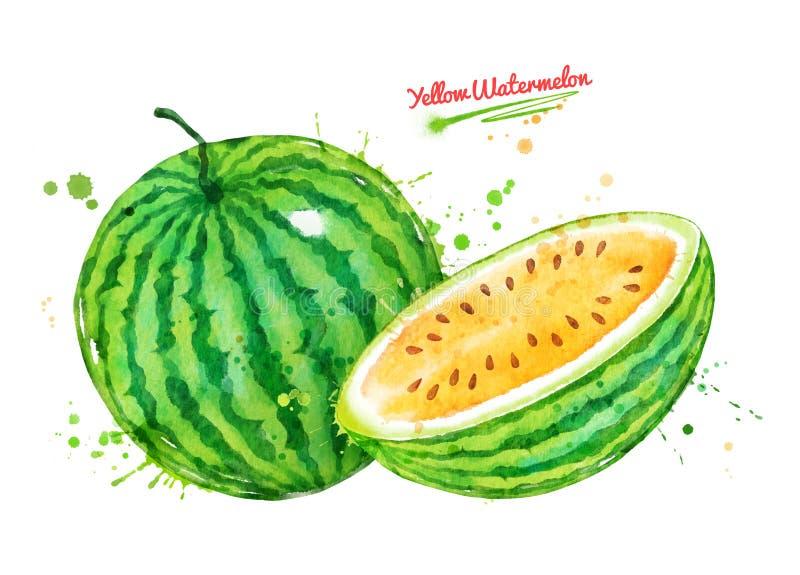 Watercolor illustration of yellow watermelon vector illustration