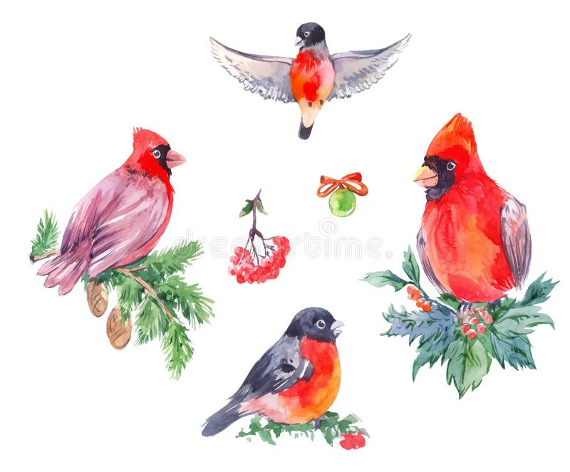 Watercolor illustrations of christmas birds. Red Cardinal, bullfi. Nches. Hand drawn winter set isolated on white stock illustration