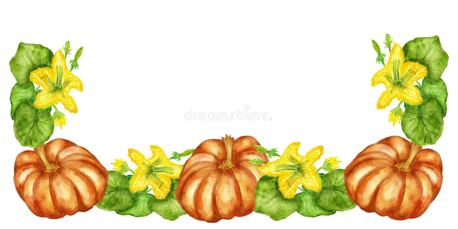 Watercolor illustrations, flowering pumpkin Bush with pumpkin fruits isolated on white background. vector illustration