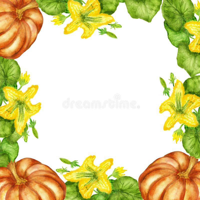 Watercolor illustrations, flowering pumpkin Bush with pumpkin fruits isolated on white background. royalty free illustration