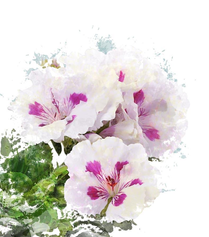 Watercolor Image Of Geranium Flowers stock illustration