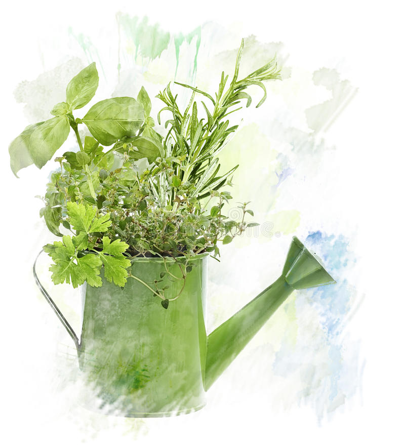 Watercolor Image Of Herbs stock illustration