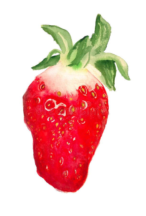 Watercolor image of strawberry stock photography