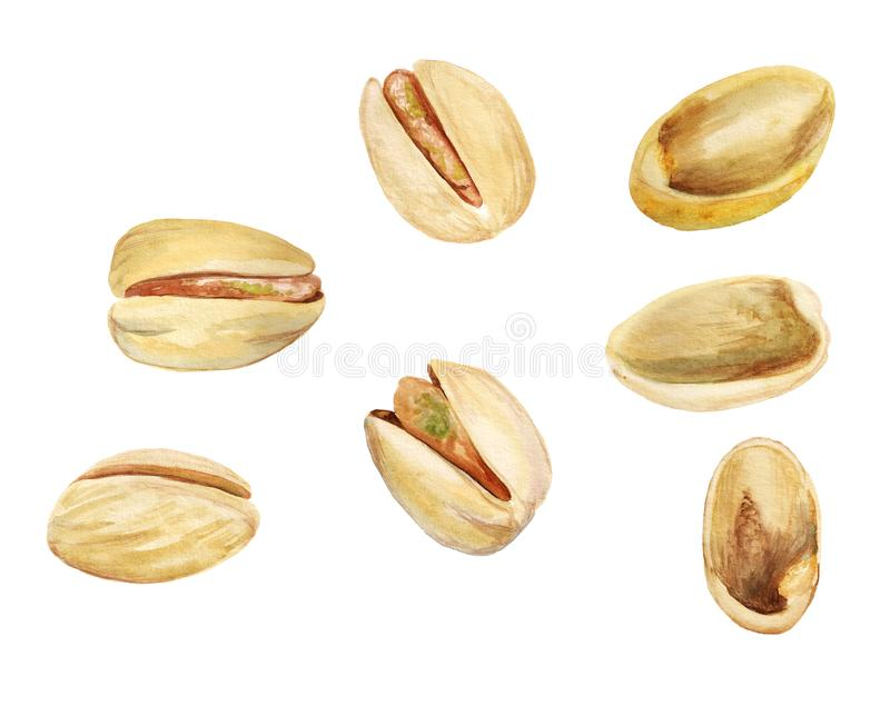 Watercolor images of pistachios stock images