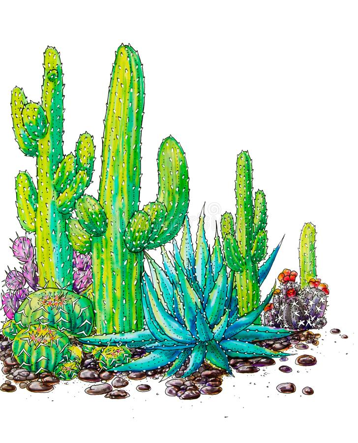 Watercolor painted cactus landscape of Mexico royalty free illustration