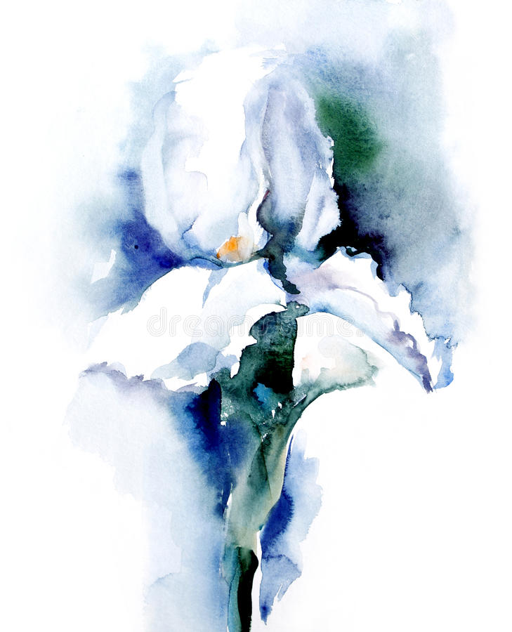 Watercolor-Iris-. Watercolor flower -Iris-. Artist Marina Grau vector illustration