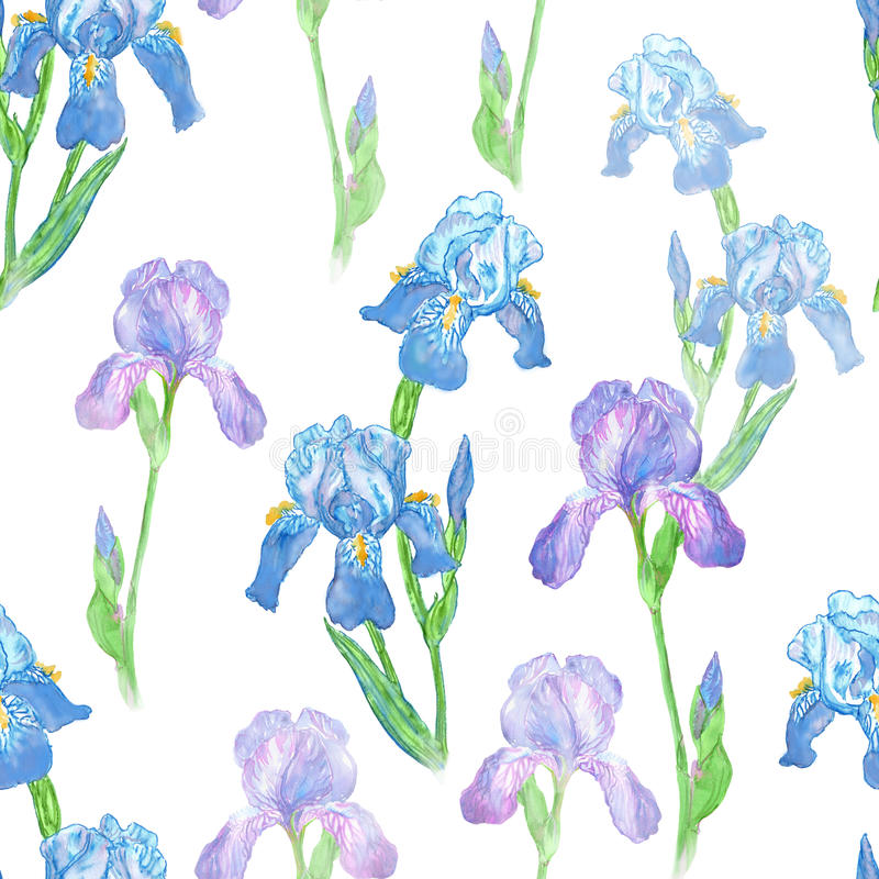 Watercolor iris flower seamless pattern on white backgr stock image