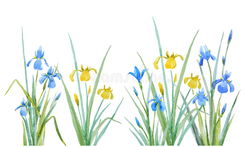 Watercolor iris flowers vector composition vector illustration