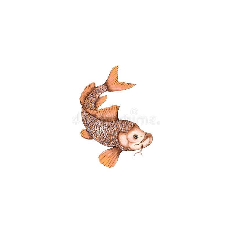 Watercolor isolated illustration of koi fish stock illustration