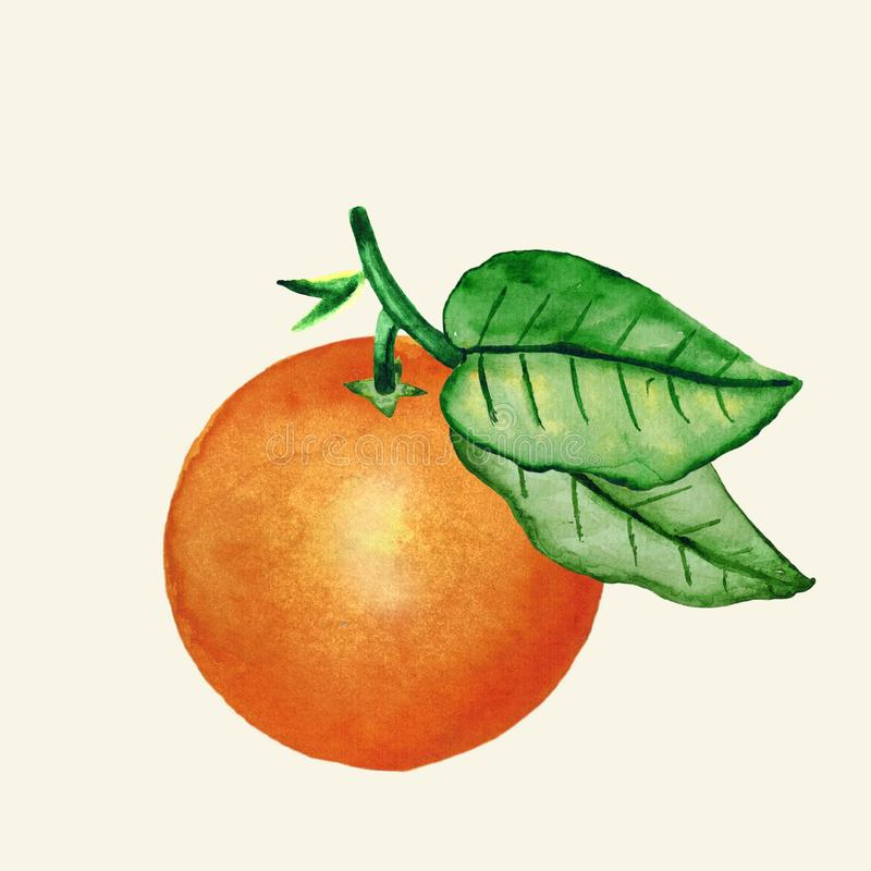 Watercolor. Isolated oranges with leaves. Illustration of citrus juicy fruit for the design of wedding invitations. Greeting cards royalty free illustration