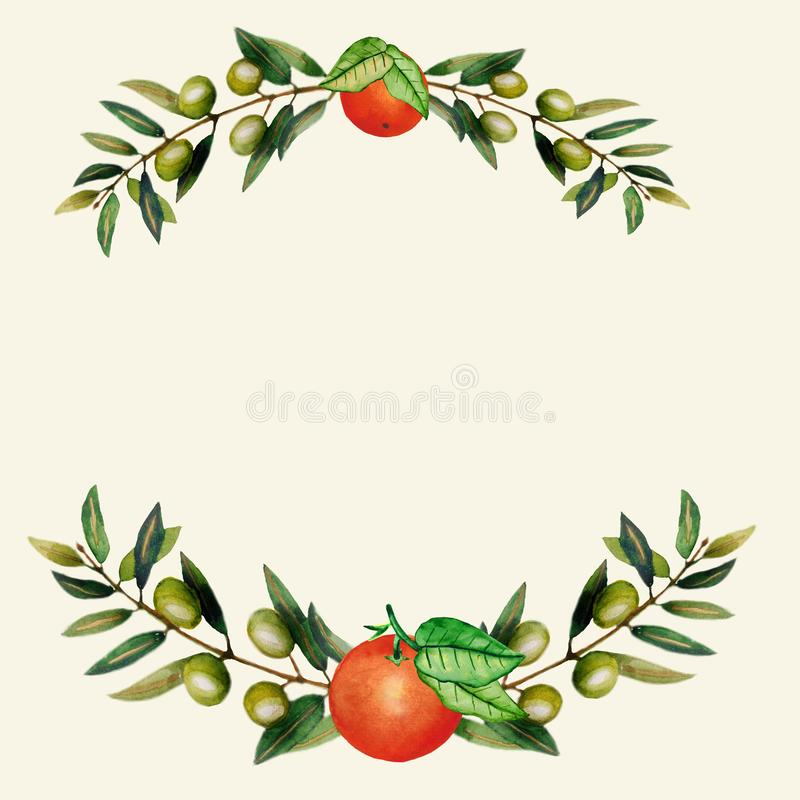 Watercolor. Isolated oranges with leaves. Illustration of citrus juicy fruit with olive branch for the design of wedding stock illustration