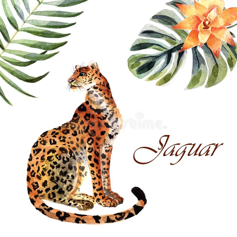 Watercolor jaguar isolated on a white background vector illustration