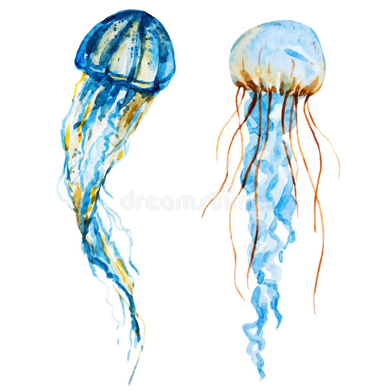 Watercolor jellyfish. Beautiful vector image with nice watercolor jellyfish royalty free illustration