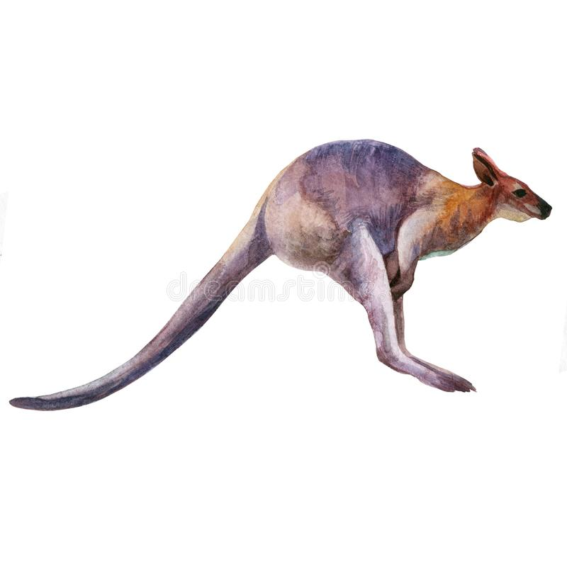 Watercolor kangaroo isolated on white background. Australian kangaroo watercolor illustration. stock illustration