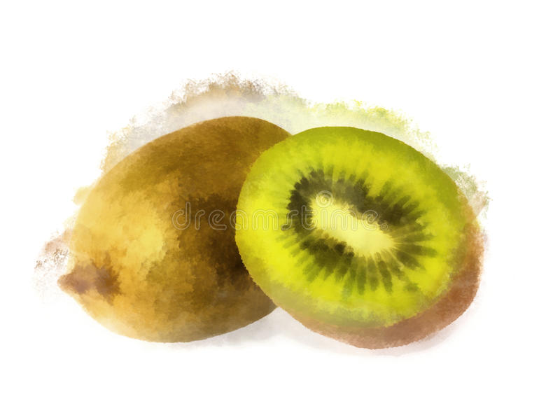 Watercolor kiwi royalty free stock photography