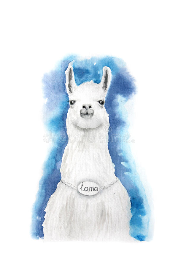 Watercolor Lama on blue background stock photos