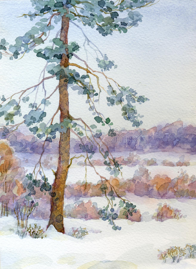 Watercolor landscape. Pine tree in the winter steppe. Watercolor winter landscape. Spreading pine tree in the middle of the steppe shrubs vector illustration