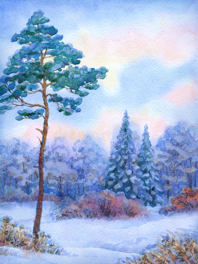 Watercolor landscape. Tall pine tree in winter forest royalty free illustration