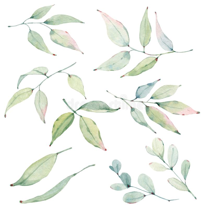 Watercolor leaves collection. royalty free illustration