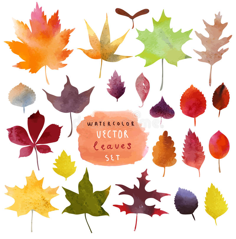Watercolor leaves set in stock illustration