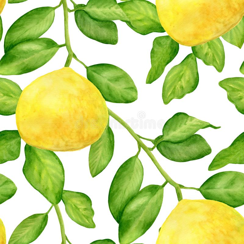 Watercolor lemon with branch and leaves seamless pattern. Hand drawn plants isolated on white background. Botanical stock illustration