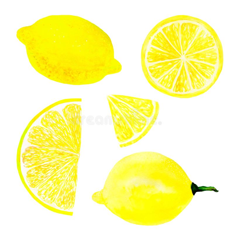 Watercolor lemon set juicy fruit and lemon slice isolated on white background. Hand painted food illustration Design royalty free stock images