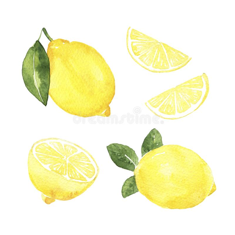 Watercolor lemons on the white background. hand drawn isolated illustration. Lemon watercolor. hand drawn illustration royalty free illustration