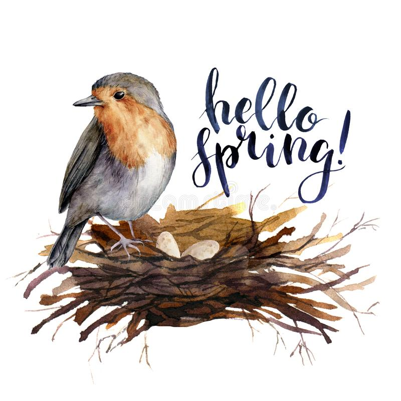 Watercolor lettering Hello spring bird card. Hand painted illustration with robin in the nest isolated on white. Background. Illustration for design, print stock illustration