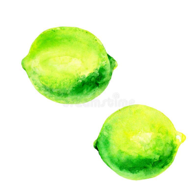 Watercolor lime set juicy fruit and lime slice isolated on white background. Hand painted food illustration Design. Healthy vegan food. Can be used as greeting vector illustration