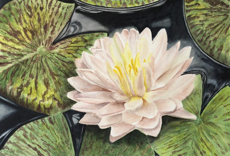 Watercolor lotus water lilies flower and leaves. stock image