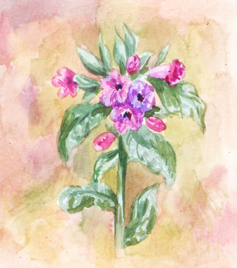 Watercolor lungwort. Vintage herbal background. Field plant stock photos