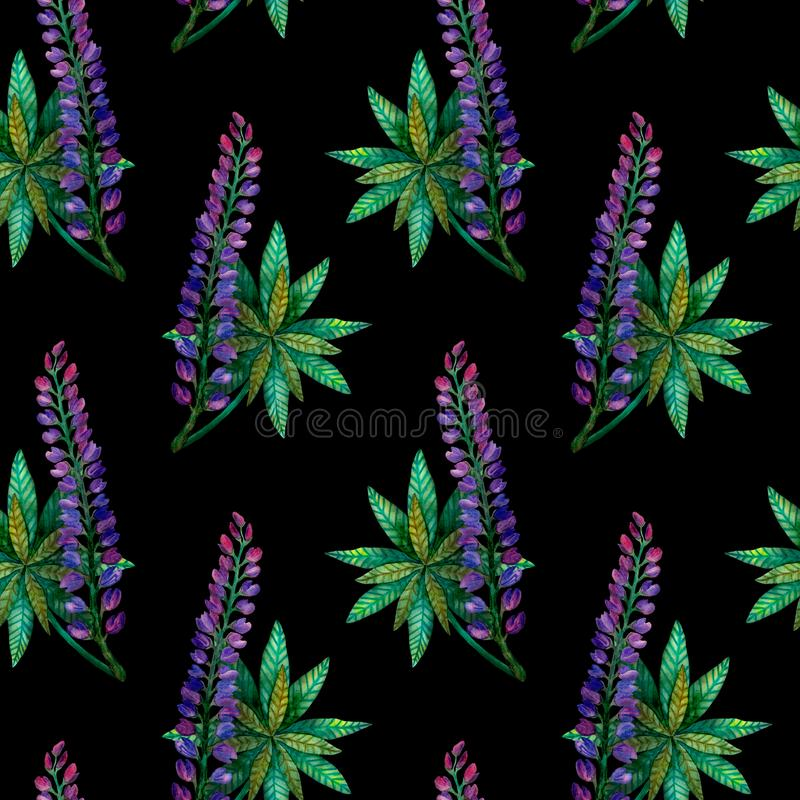 Watercolor lupins. Seamless bright colorful summer flower pattern on black vector illustration