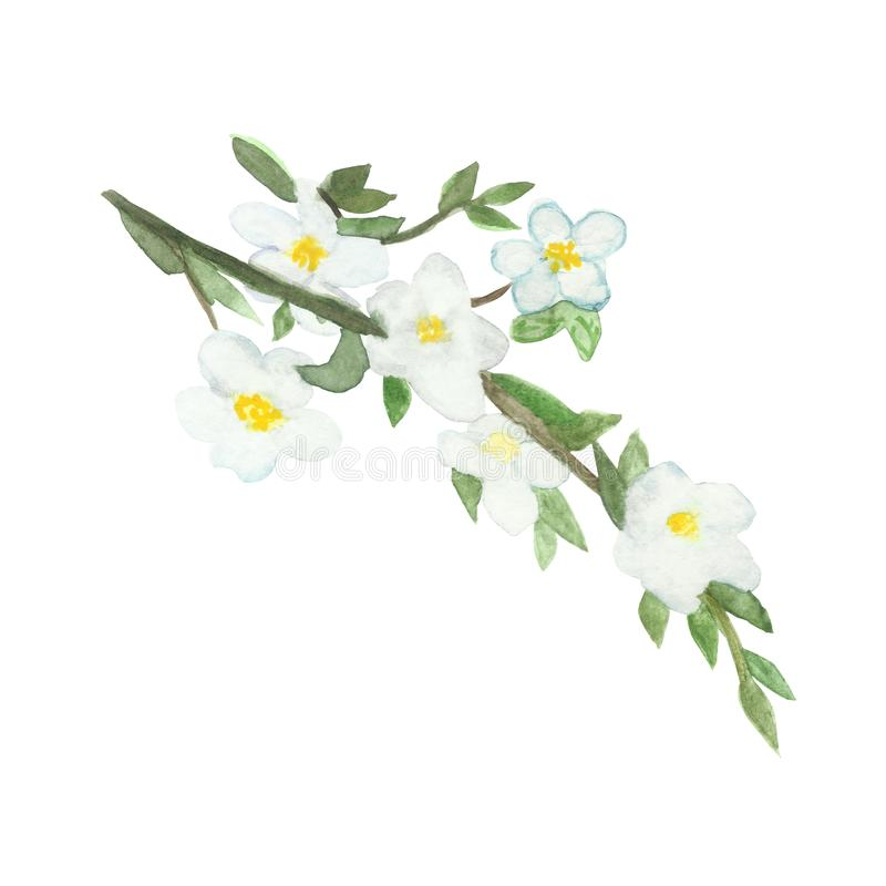 Watercolor lush bouquet of flowering branches of Apple trees. Botanical spring illustration of Apple tree branches with white flowers for beautiful design royalty free illustration