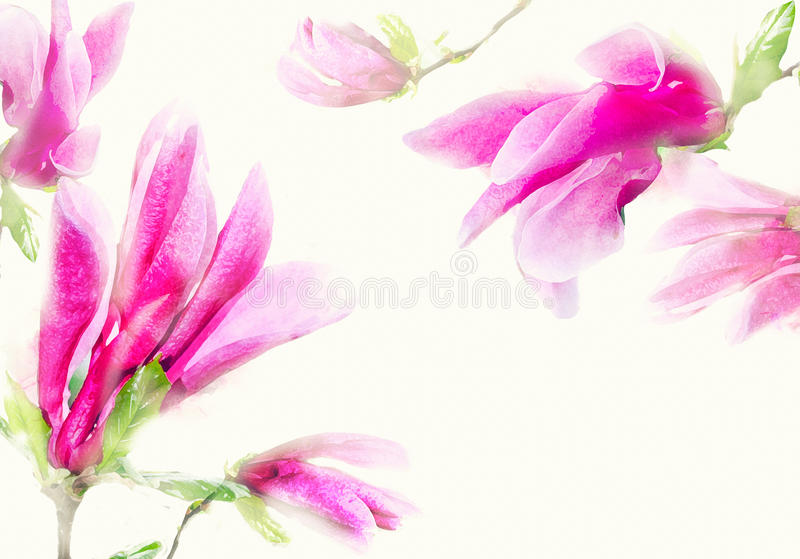 Watercolor magnolia frame. Background with watercolor pink tender magnolia flowers royalty free stock photo