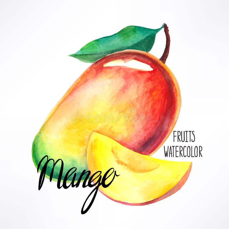 Watercolor mango vector illustration
