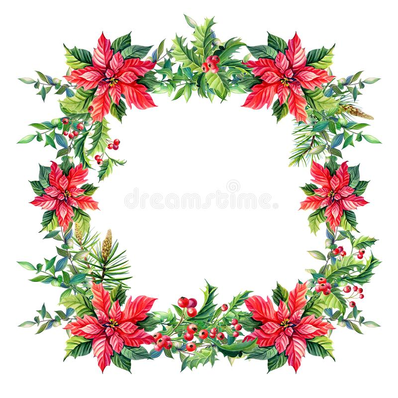 Watercolor Merry Christmas Frame with Red poinsettia flowers,Holly,leaves,berries,pine,spruce,green twigs on white vector illustration