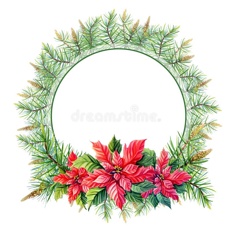 Watercolor Merry Christmas Wreath with Red poinsettia flowers, pine,spruce on white background. royalty free illustration
