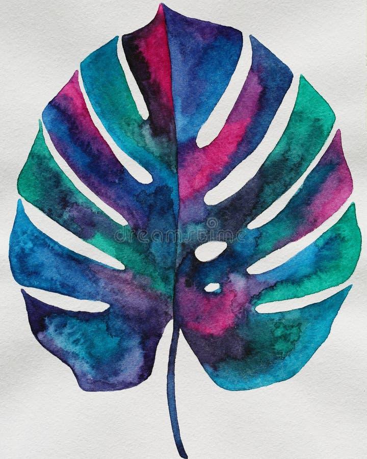 Watercolor monstera leaf stock illustration