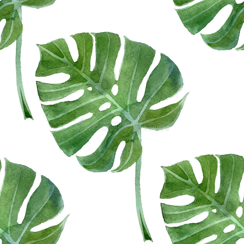 Watercolor monstera leaf seamless royalty free illustration