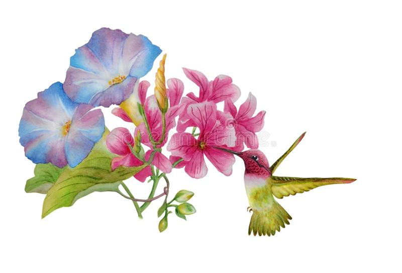 Watercolor with  morning glory and pink mallow vector illustration