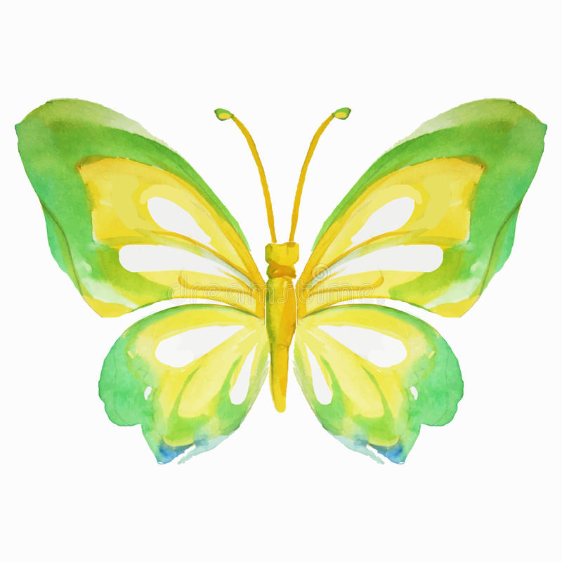 Watercolor multicolored butterfly. Vector illustration. Watercolor yellow-green butterfly. Vector illustration vector illustration