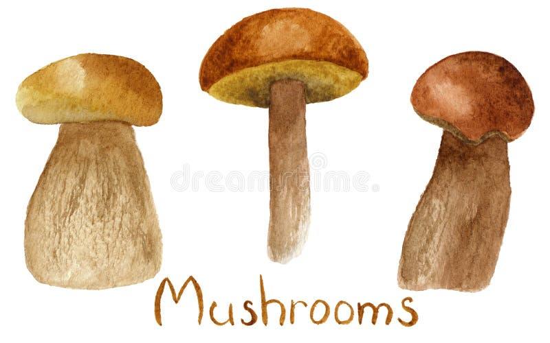 Watercolor mushrooms illustration set isolated on white background royalty free illustration