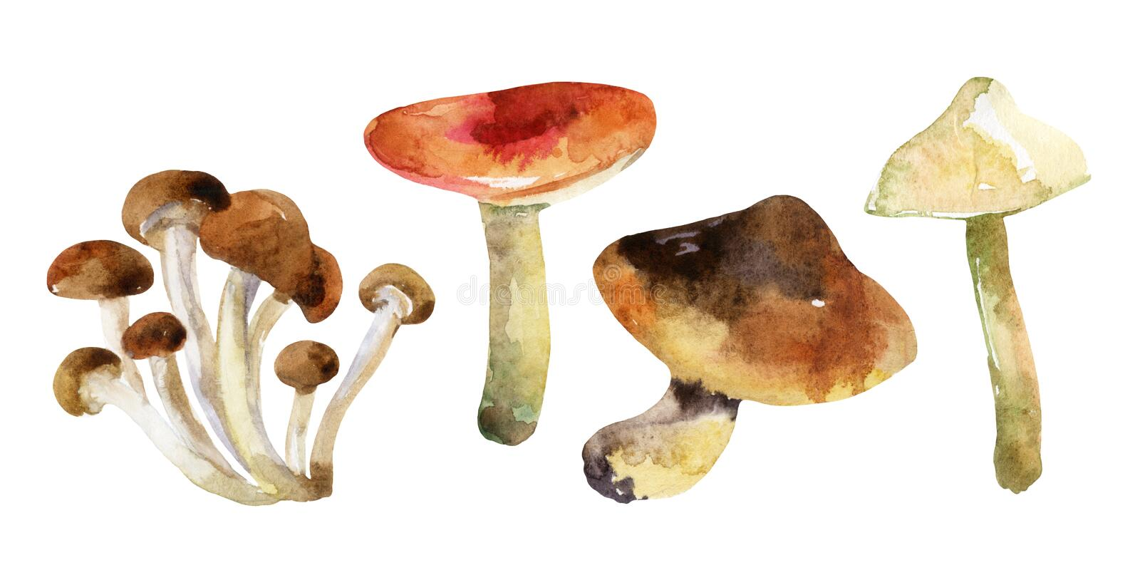 Watercolor mushrooms set on white background. Edible mushroom collection. Hand painted illustration for design autumn background stock illustration