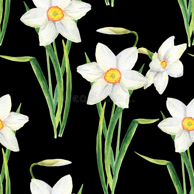 Watercolor narcissus flower seamless pattern. Hand drawn daffodil bouquet illustration isolated on black background royalty free stock photography