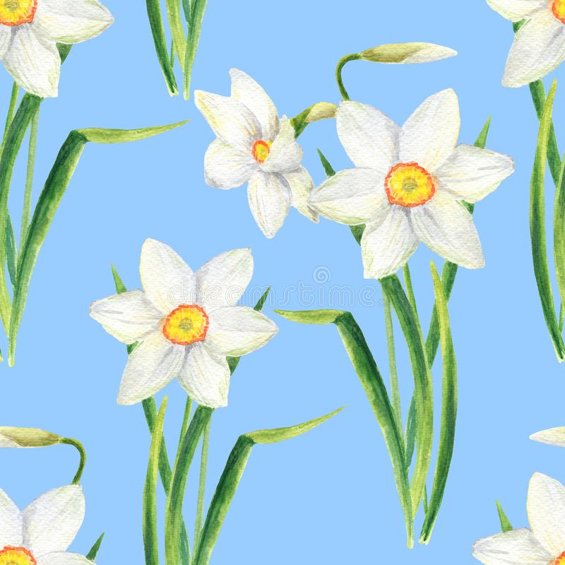 Watercolor narcissus flower seamless pattern. Hand drawn daffodil bouquet illustration isolated on blue background stock photography