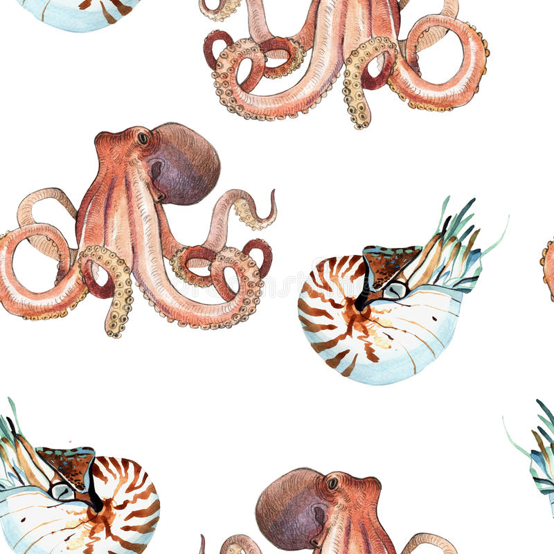 Watercolor nautilus and octopus. Watercolor pattern of nautilus and octopus hand painted illustration isolated on white background stock illustration