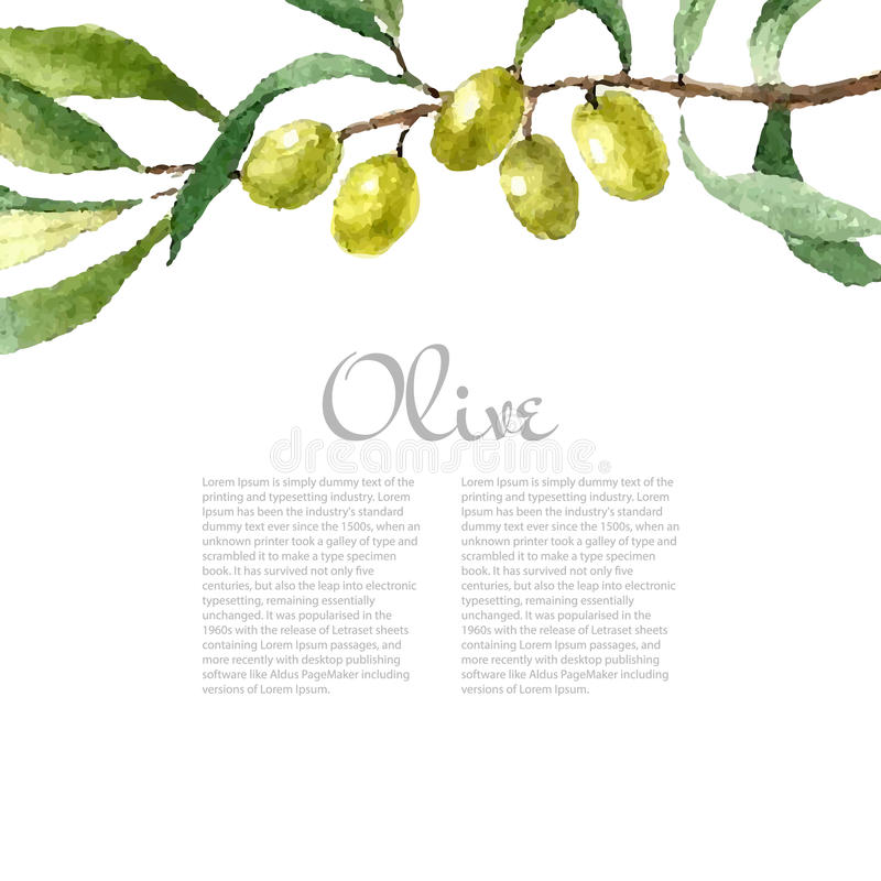Watercolor olive branch background. Hand drawn natural elements. Watercolor green olive branch on white background . Hand drawn isolated natural object with vector illustration