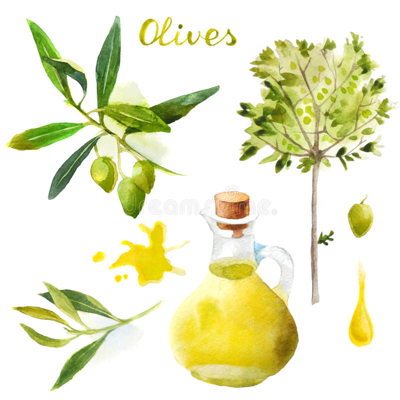Watercolor olives set royalty free illustration