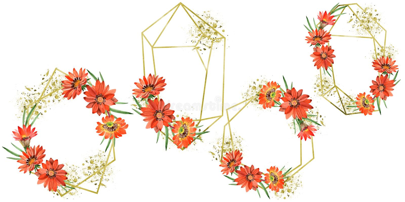 Watercolor orange gazania flowers. Floral botanical flower. Frame border ornament square. Aquarelle wildflower for background, texture, wrapper pattern, frame stock image