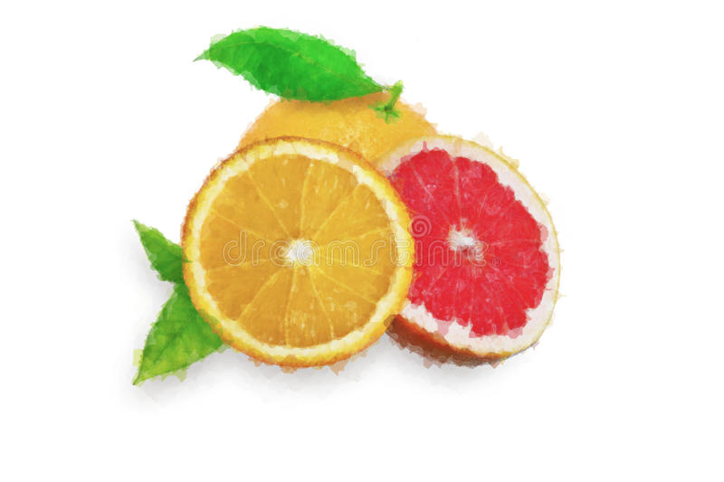 Watercolor orange and grapefruit painting on white background stock photography